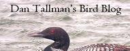 Dan Tallman's Bird Blogs