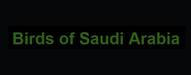 birds of saudi arabia